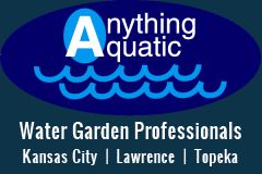 Anything Aquatic